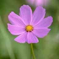 flower boo!
