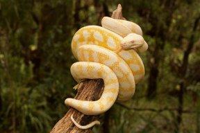Python~